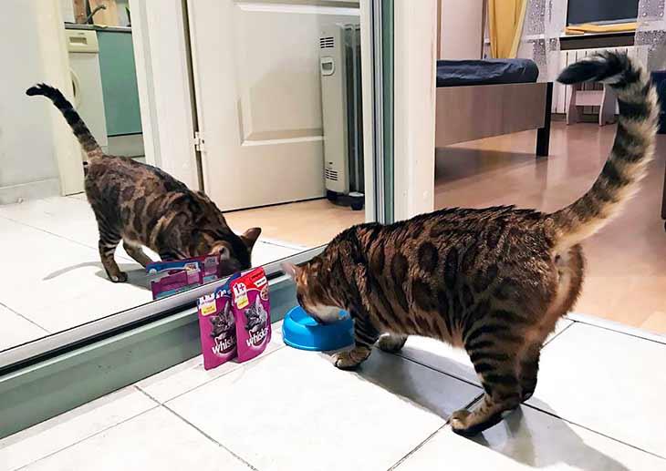 Особенности влажныхкормов для кошек