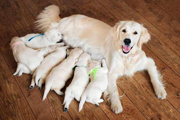Как принять роды в домашних условиях