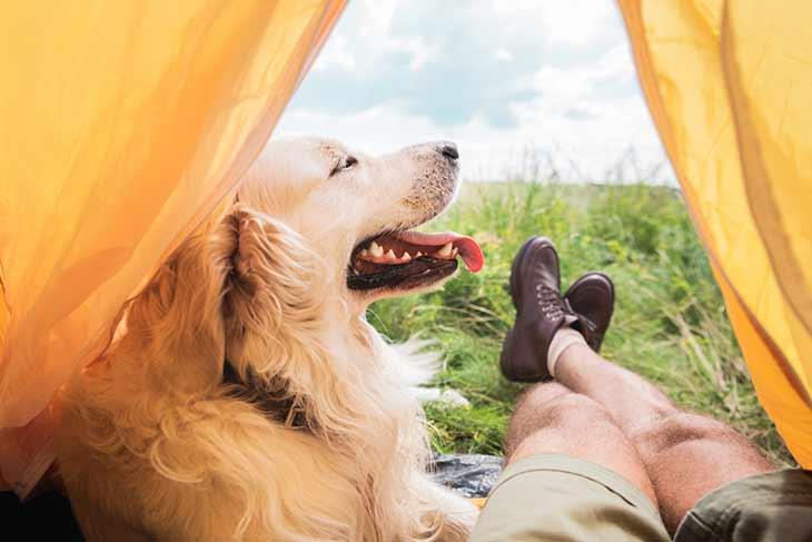 Топ 5 стихов о собаках