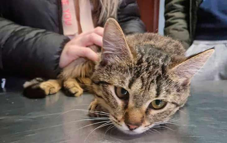 Поведение кошки во время болезни - стадии заболевания