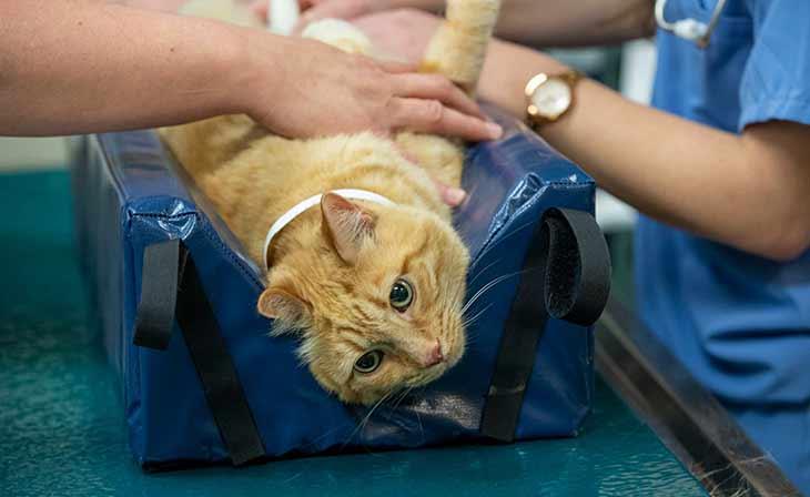 у котов уретростомия