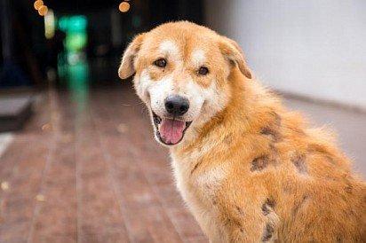 Стригущий лишай у собаки