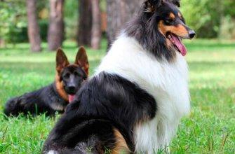 Лучшие породы собак