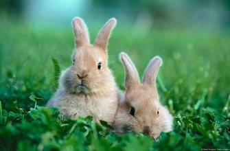 Клички для кроликов