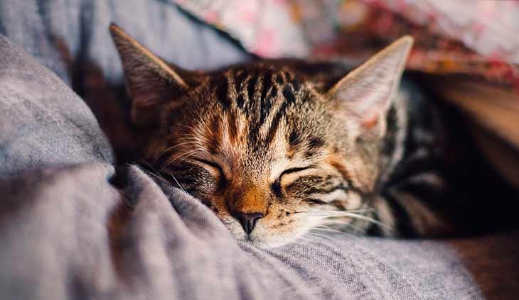 Как ухаживать за котом после операции