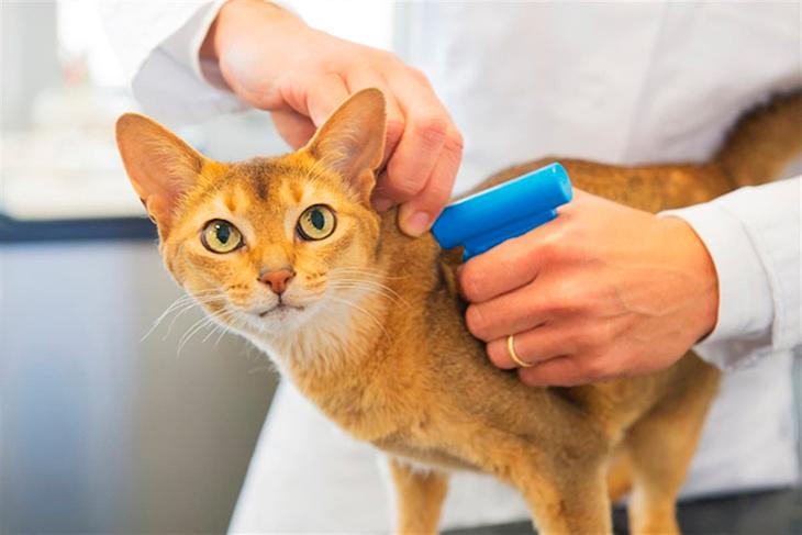 Встреча с ветеринаром