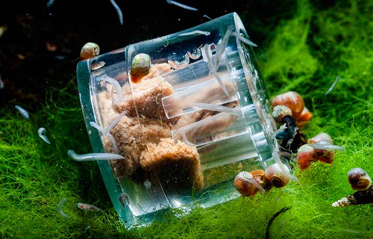 Появление червей в домашнем аквариуме
