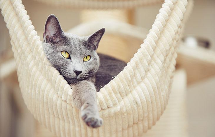 Рекомендации по уходу за беременной кошкой