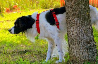 Классификация цистита у собак