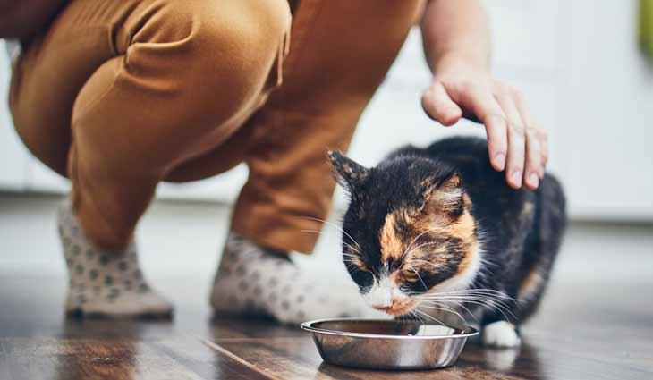 Рейтинг супер премиум кормов для кошек