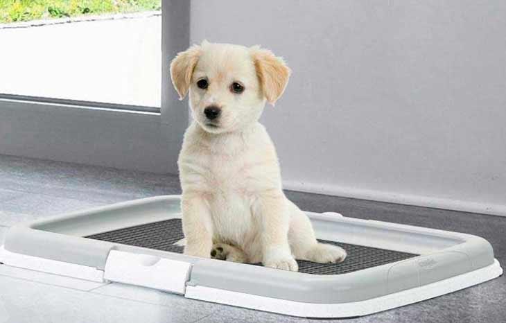 Физиологические потребности собаки
