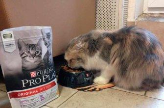 Обзор корма для кошек Pro Plan