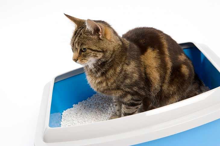 Трудности приучения кошки к лотку и способы их преодоления