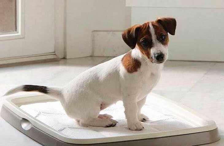 Приучение к туалету щенка