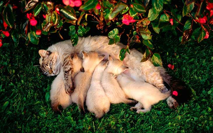Сонник Миллера: кошка рожает