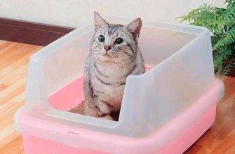 Как приучить уличную кошку к домашнему туалету