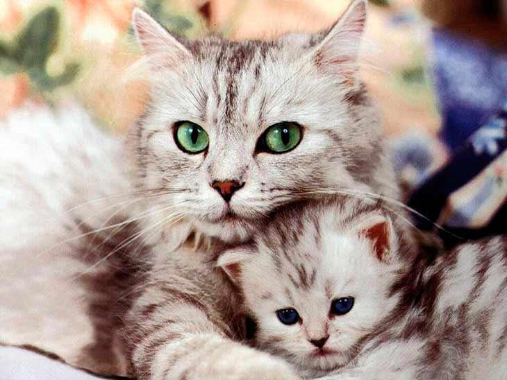 Особенности и внешний вид семейства кошачьих