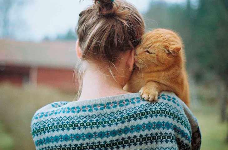 Физическое развитие и этапы роста котенка