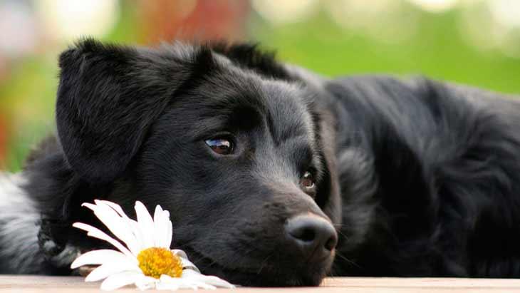 Обзор десять сонников о черной собаке