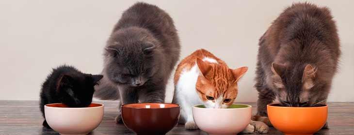 Анализ состава кормов для кошек