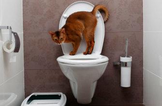 Приучение котенка к унитазу