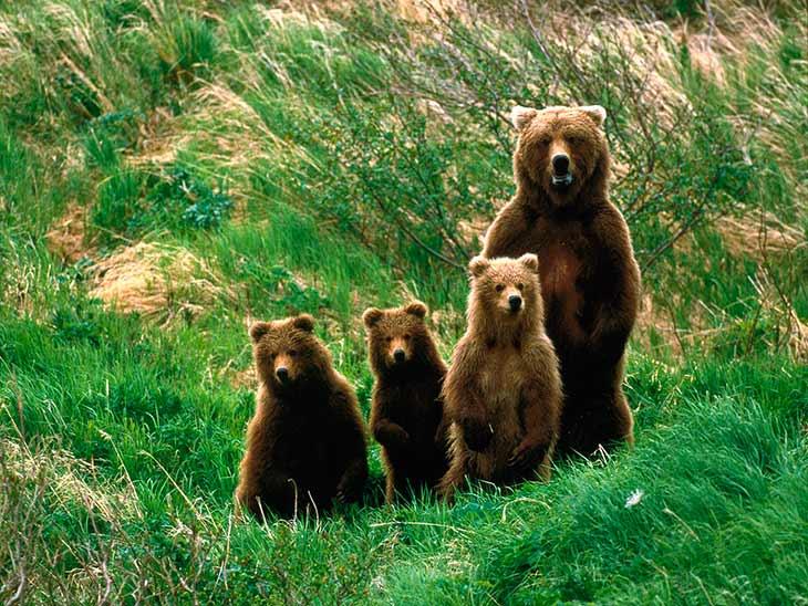 Интересные факты о лесных животных