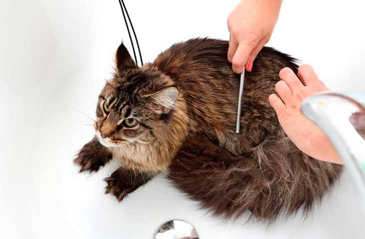 Как определить, что у кошки появилась перхоть?