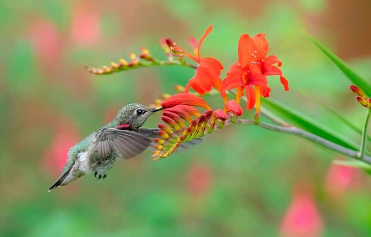 Образ жизни колибри