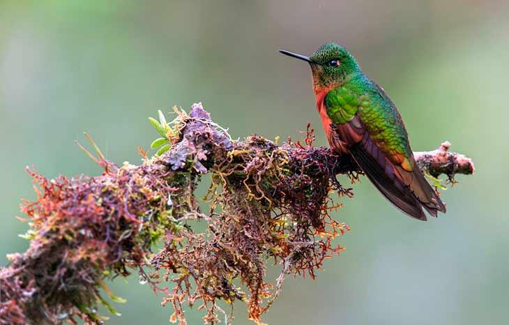 Питание, добыча колибри