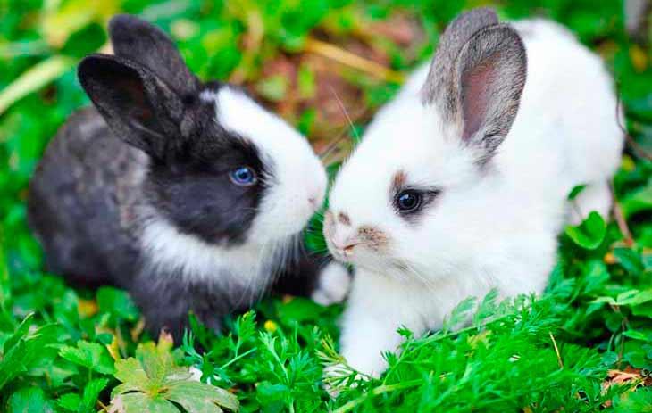 Чем кормить декоративных и карликовых кроликов
