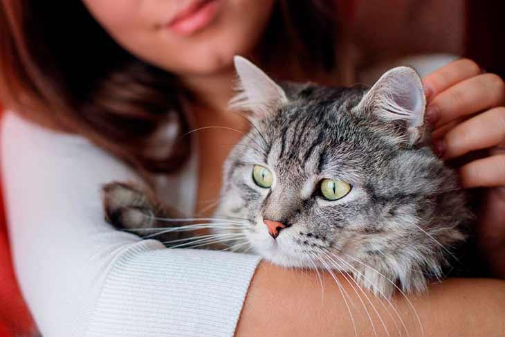 Все кошки взрослеют по-разному