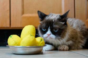 Как устроено обоняние у котов?