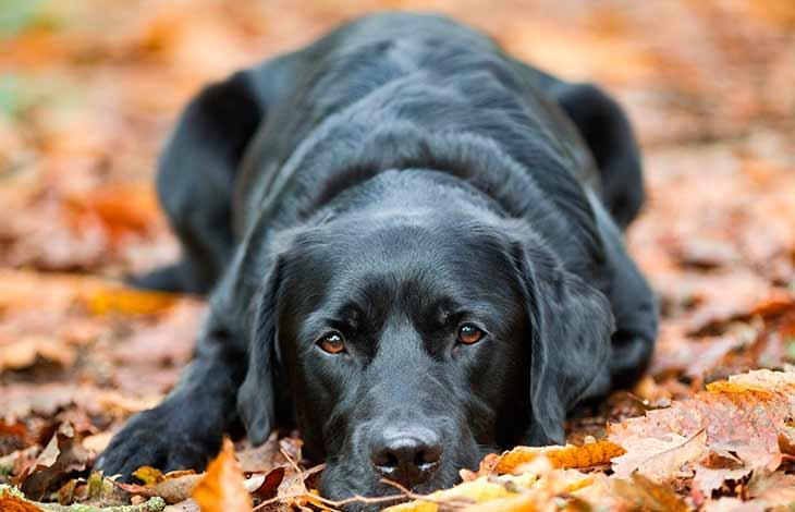 Когда сны про черную собаку сбываются
