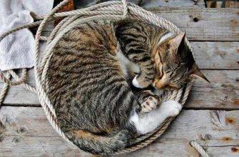 Сонник: к чему снятся коты женщине