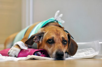 1046 лечение мастита у собаки