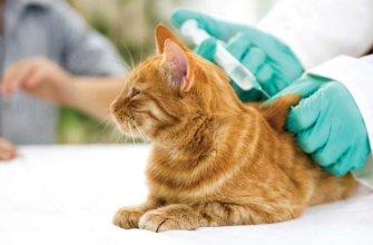 Прививка для кошек
