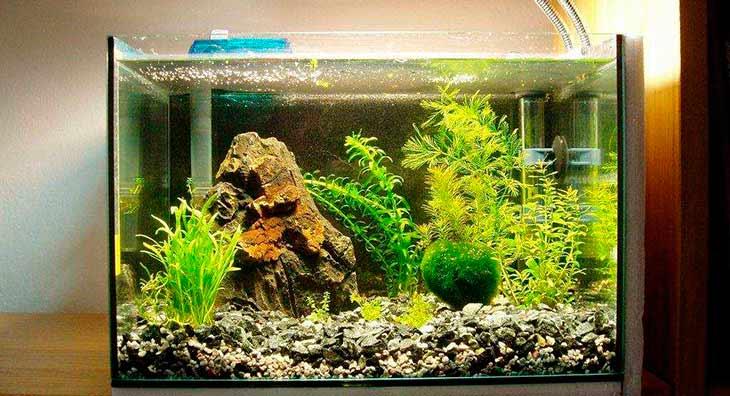 Значение правильного оформления аквариума