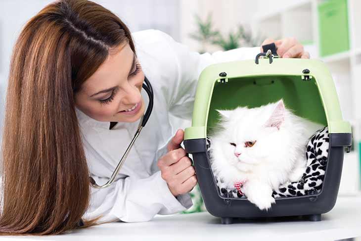 Кошка у доктора