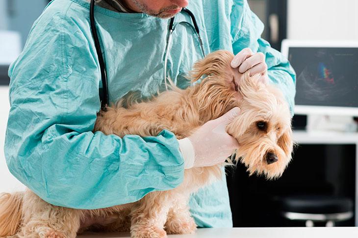 Причины кожных болезней у собак