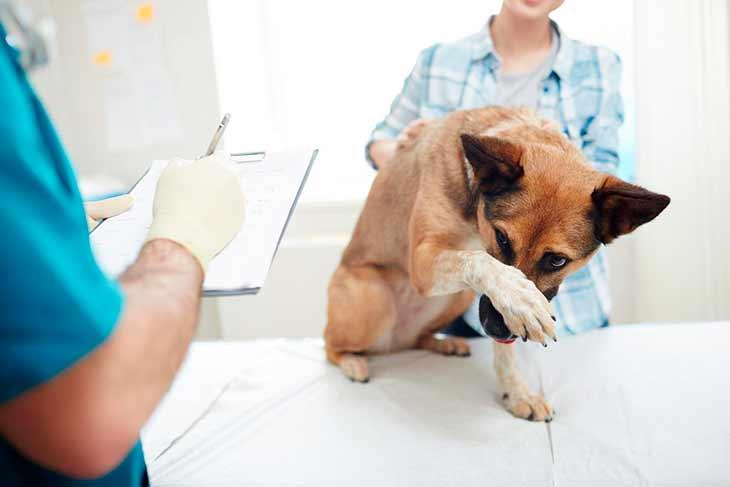 Когда нужно показать ветеринару?