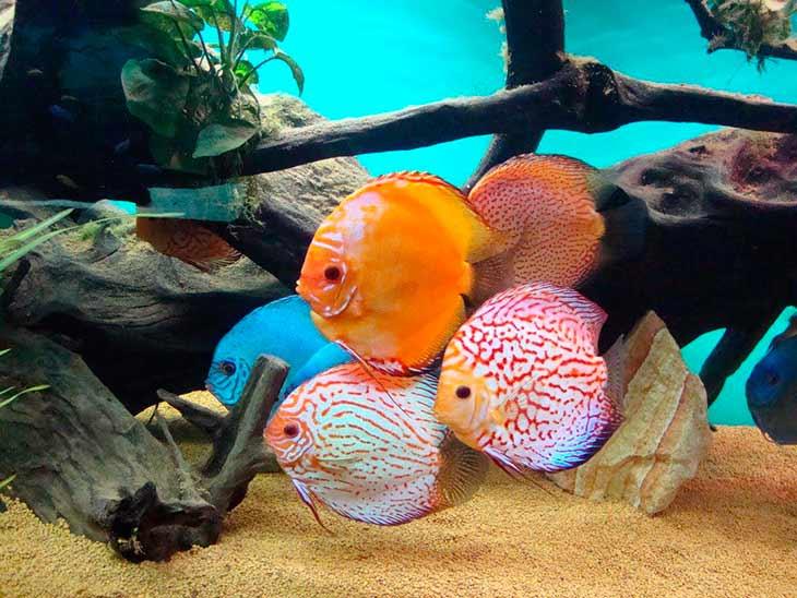 Интересные названия клички для аквариумных рыбок