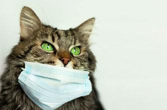 Инфекционный перитонит FIP у кошек