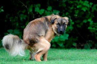 Почему кал собаки становится зеленым?
