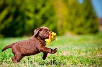 Как ухаживать за щенками?