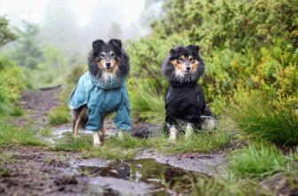 Снять мерки с собаки