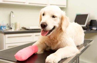 Признаки вывихов суставов у собак