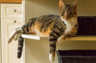 Как определить, что кошка беременна?