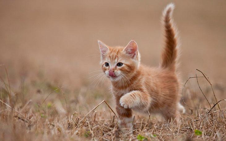 Рыжий котенок толкование по сонниках
