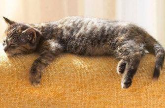 К чему чему снятся кошки мертвые