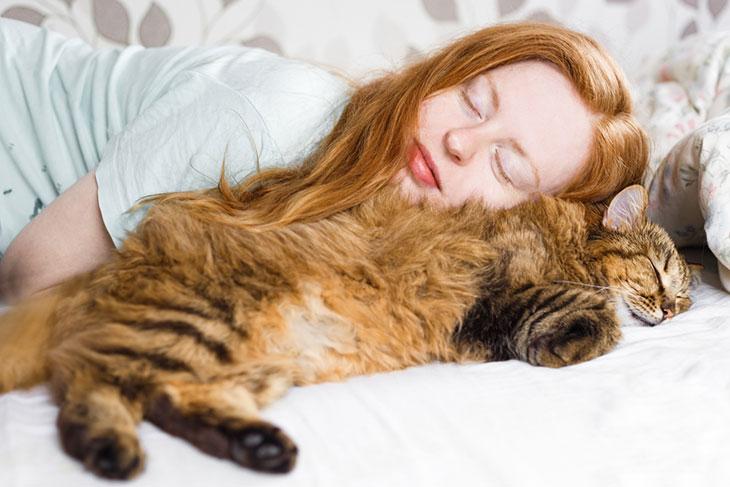 Уход забеременной кошкой